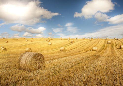 straw-field-col