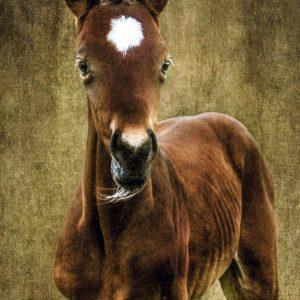 Foal.texture-best